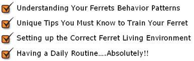 ferret-as-pets-mini-course