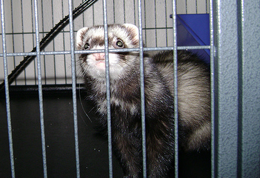 4 Steps on How to Ferret Proof Your Home